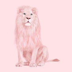 ALBINO LION - Paul Fuentes Design