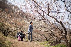 봄날의 청아한 휴식, 봄꽃 여행 – 구례 산수유마을, 하동 쌍계사, 광양 매화마을