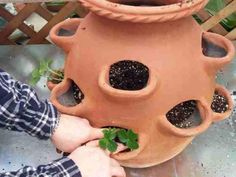 Planting a strawberry pot Outdoor Life, Outdoor Ideas, Outdoor Spaces, Outdoor Gardens, Outdoor Living, Outdoor Decor, Garden Trees, Garden Plants, Strawberry Planters