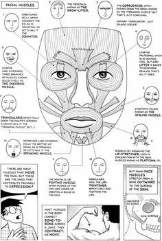 Risultati immagini per scott mccloud facial expressions Facial Muscles Anatomy, Muscle Anatomy, Muscles Of Facial Expression, Respiration Relaxation, Botox Injection Sites, Oral Motor Activities, Facial Aesthetics, Medical Anatomy, Human Anatomy And Physiology