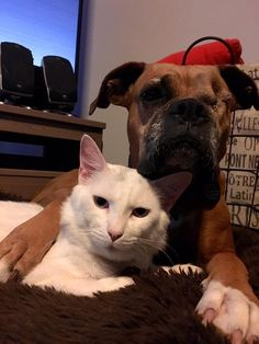 One-Eyed Dog And Injured Cat Fall In Love In Their Foster Home