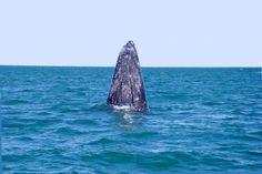 Whale watching in Baja California Sur, Mexico. Picture from http://yfrog.com/user/SECTURBCS/profile