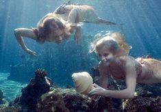 I got: Regular Mermaid! What Kind of Mermaid Are You? I like how the mermaids used for regular are from Mako Mermaids Types Of Mermaids, H2o Mermaids, Mermaids And Mermen, Mako Mermaids Tails, Mermaids Exist, Dark Mermaid, The Little Mermaid, Fun Test, Mermaid Photos