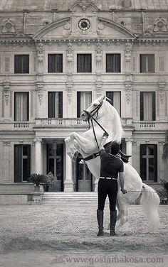 Juan Jose Verdugo Camacho & Atento. The Royal Andalusian School of Equestrian Art, Jerez de la Frontera.