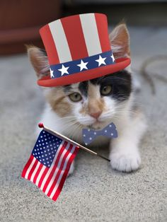 Happy 4th of July Cats | Kitten Fourth of July photo