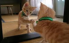 VIDEO http://youtu.be/I_DXJexwBho New Funny Cats 2014 | VIDEO COMPILATION New Funny Cats 2014 | VIDEO COMPILATION New Funny Cats 2014 | VIDEO COMPILATION New Funny Cats 2014 | VIDEO COMPILATION New Funny Cats 2014 | VIDEO COMPILATION