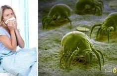 dust mites FI
