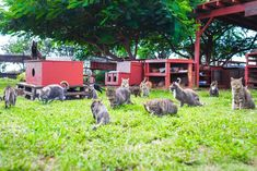Lanai Cat Sanctuary - A Cat Refuge and Kitty-Lover's Heaven in Remote Lanai, Hawaii Feral Cats, Lanai, Bored Panda, Garden Sculpture, Pets, Heaven, Places, Kitty Cats, Cemetery