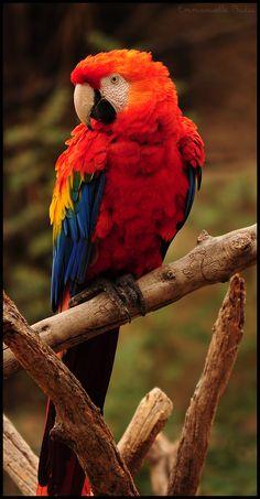 """Rainbow Bird"" by photographer Emmanuelle Badia"