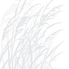 Wall mural - Grass - Light Grey