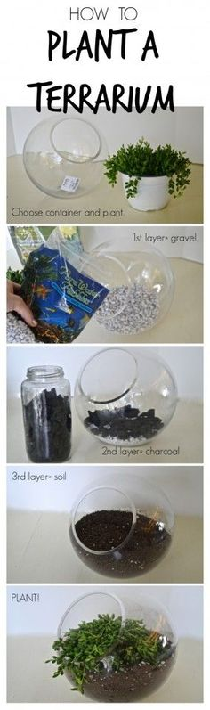 Follow these simple steps to create amazing terrariums out of just about any container you can find!:
