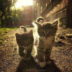 #cute cute cute