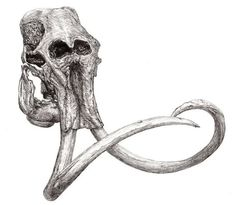 Gallery Elephant Skull Drawing: