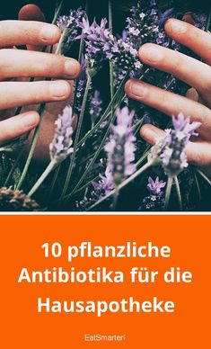 Pflanzliche Antibiotika: Die effektivsten 10   eatsmarter.de