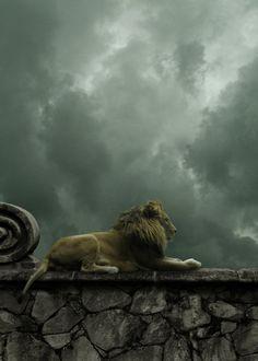 Lion King, Valhalla  photo via besttravelphotos
