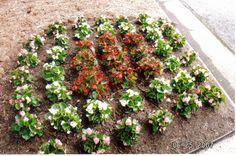 Begonia installation