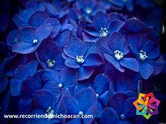 """RECORRIENDO MICHOACÁN. ¿Sabe el significado tiene el nombre de Jiquilpan? este nombre viene del náhuatl que quiere decir """"lugar de añil"""" dando referencia al tono azul, o """"lugar de plantas tintoreras"""" que son plantas con un gran contenido de tinte natural. Visite el hermoso pueblo de Jiquilpan durante su próximo viaje al increíble estado de Michoacán. BEST WESTERN MORELIA http://www.bestwestern.com.mx/best-western-plus-gran-hotel-morelia/"""