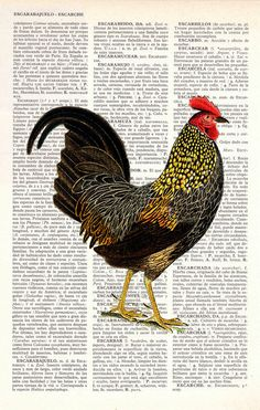 Chicken Book print dictionary Print on Vintage Dictionary Book altered art…