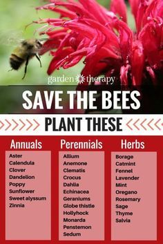 Here are some of the many varieties of flowering plants that bees love. It's better to plant a number of the same plants than many different varieties as bees are attracted to larger expanses of one kind of flower. More on creating a bee friendly garden in the post #ad #bee #garden