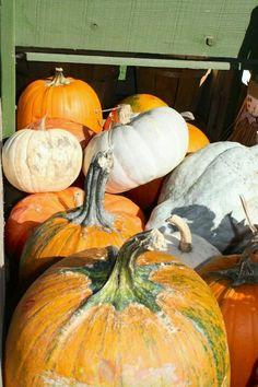 Autumn at the Farmer's Market!