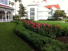 Again, impeccable landscaping at Disney at the Grand Floridian!