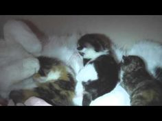 Katzenbabys Müsli Mama 4 Nacht