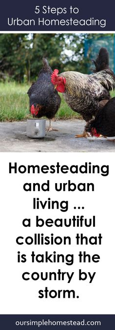 5 Steps to Urban Homesteading - Homesteading and urban living …a beautiful collision that is taking the country by storm. Are you trying to feed yourself from your own garden? Maybe you're trying to squeeze a few chickens into your postage-stamp sized backyard?