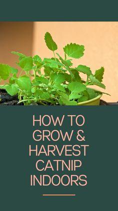 Garden Bugs, Diy Herb Garden, Edible Garden, Lawn And Garden, Herbs Garden, House Plants Decor, Plant Decor, Growing Herbs At Home, Growing Plants
