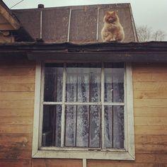 cat russia