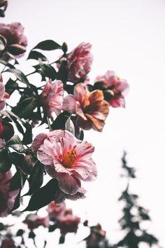 P i n t e r e s t sarahesilvester hátterek flower wallpaper, Tumblr Backgrounds, Flower Backgrounds, Wallpaper Backgrounds, Iphone Wallpaper, Pink Flowers, Beautiful Flowers, Sunflower Wallpaper, No Rain, Flower Aesthetic