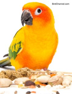 Find out how proteins, fat, carbohydrates, vitamins and minerals work in your bird's body.