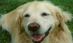 Surviving Pet Loss-