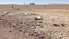 'We're Going to Be Out of Water': Navajo Nation Dying of Thirst - ICTMN.com