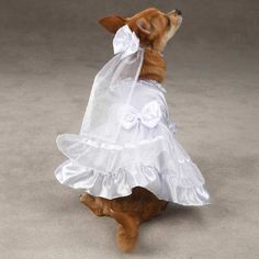 Are you looking for that perfect dog dress for an upcoming wedding or major event? Well we have to warn you, if your pup wears the Fancy Lace Dress you may caus