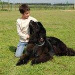 bigstock_Child_And_Giant_Dog_2199527 (2)