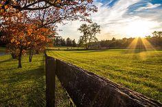 Title  Golden Sunset At The State Arboretum Of Virginia   Artist  Denise McLaurin   Medium  Photograph - Photograph