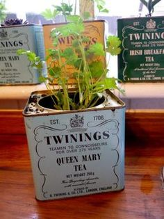 Bring your garden inside this winter and brighten up your windowsill by placing herbs in these cute, vintage Twinings Tea tins. Yes please!