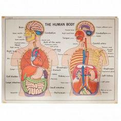 Vintage Anatomic Poster 'The human Body'