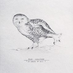 • 11/50 • Bubo scandiacus (Nyctea scandiaca) / The Snowy Owl / Полярная сова. Project #50shadesofowls - drawings by Asya Mitskevich.