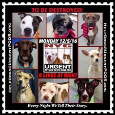 """8 BEAUTIFUL LIVES TO BE DESTROYED 12/05/16 @ NYC ACC **SO MANY GREAT DOGS HAVE BEEN KILLED: Puppies, Throw Away Mamas, Good Family Dogs. This is a HIGH KILL """"CARE CENTER"""" w/ POOR LIVING CONDITIONS.  Please Share:  To rescue a Death Row Dog, Please read this: http://information.urgentpodr.org/adoption-info-and-list-of-rescues/ /"""