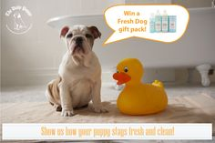 Enter our first photo contest and win a Fresh Dog Bath Package! http://www.dailypuppy.com/blog/fresh-dog-photo-contest_1084