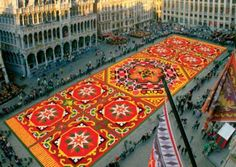 Carpet Of 700,000 Flowers In Brussels, Belgium!