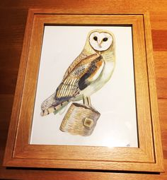 Barn Owl. A commission