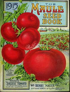 seeds_catalogs-00623 - 019-Tomato, field [2704x3592] -  botanical qulity masterpiece ArtsCult century scan blooming 17th plants domain royalty Pictorial 1800s paintings scrapbooking Artscult engravings collection wall download supplies Edwardian fabric Paper use free flowers 1900s pack orchidacaea ArtsCult.com books beautiful clipart craft natural 1700s ornaments flora 18th nature picture high illustration Graphic art Victorian botany pages printable decoration public collage old vintage…