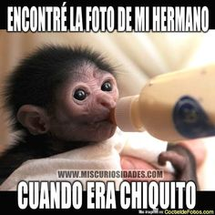 New memes chistosos risa mexican humor Ideas Mean Humor, Funny Spanish Memes, Single Humor, Memes Funny Faces, Hilarious Quotes, Frases Humor, Romance, Facebook Humor, Boyfriend Humor