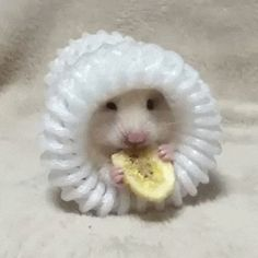 hamster_in_pouch_eats_banana_chip_gif_8191153169.gif (400×400)