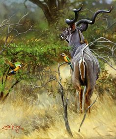 Lute Vink. One of the best wildlife artists in the world and obviously in South Africa. Also known as my dad ♥ ♥ Painting : kudu