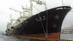 """Two of Japan's whaling ships have returned home from Antarctic with no catch onboard for the first time in nearly 30 years, local news reported. The news comes after a UN court ordered an halt to Japan's annual """"scientific"""" whale hunt. The 724-ton Yushinmaru and the 747-ton Daini (No 2) Yushinmaru returned to port in Shimonoseki, western Japan, which is considered to be one of the major whaling bases in the country, on Saturday. This is the first time the whale-hunting vessels have returned…"""