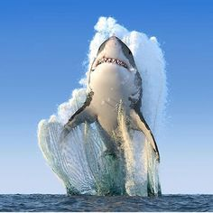 Great White Shark leaping from the ocean #TourThePlanet  Photography by Alexyz3d/Shuttershock