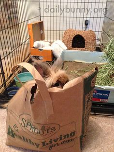 Impatient bunny jumps in the hay bag - February 6, 2015